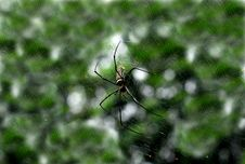 Nature Spider Royalty Free Stock Images