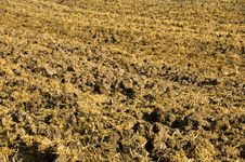 Free Stubble Mulch Royalty Free Stock Photography - 2057587