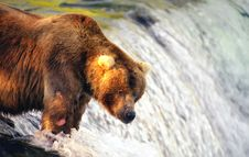 Free Brown Bear Waiting For  Salmon Royalty Free Stock Photography - 2059077