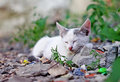 Free Little Kitten  On The Grass Close Up Royalty Free Stock Image - 20501866