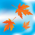 Free Falling Leaves On Sky Background Stock Photo - 20509780