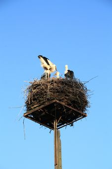 Free Storks Nest Stock Photo - 20500230