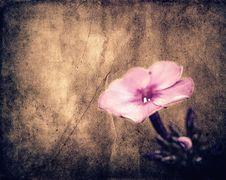 Free Vintage Flower Royalty Free Stock Photos - 20500858