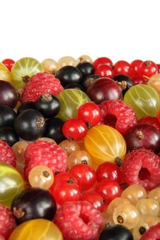 Free Berry Background Vertical Royalty Free Stock Images - 20501369