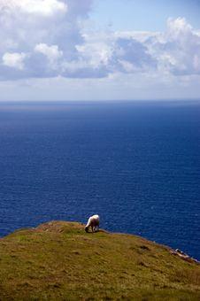 Free Sheep @ Slieve Leage Stock Photos - 20504943