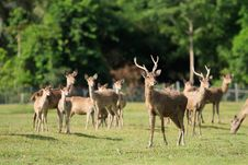 Free Deer Royalty Free Stock Photo - 20505185