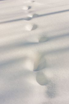 Free Traces On Snow Royalty Free Stock Photos - 20505358