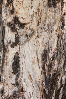 Free Old Bark. Stock Images - 20506024