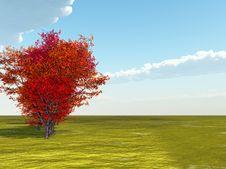 Free Autumn Landscape Royalty Free Stock Image - 20506276