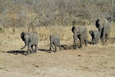 Free Elephant Family Stock Photos - 20507393