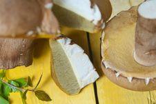 Free Boletus Mushroom Royalty Free Stock Images - 20507439