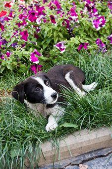 Free Puppy Stock Image - 20507541