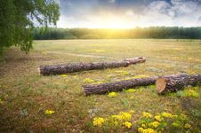 Free Wood Glade On A Sunset Royalty Free Stock Images - 20507569