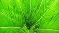Free Green Hornbeam Leaves Stock Photos - 20512033