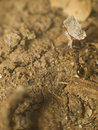 Free Ant Stock Images - 20513764
