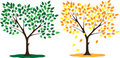 Free Tree Seasons Summer And Autumn Stock Image - 20516781