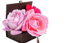 Free Roses In A Box Stock Photos - 20510323