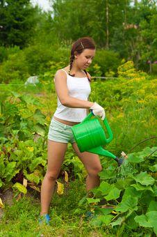 Free Woman Gardener Watering Stock Image - 20510911