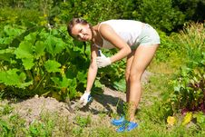 Free Young Woman With Hoe Stock Photography - 20510972