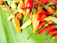 Free Hot Peppers Royalty Free Stock Images - 20511419