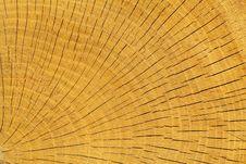 Free Wood Oak Royalty Free Stock Photos - 20511918