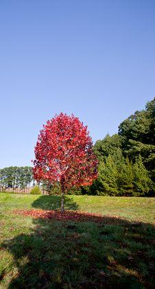 Free Autumn Trees Royalty Free Stock Photo - 20513975