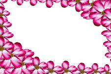 Free Pink Flower Frame Royalty Free Stock Photos - 20514188