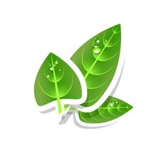 Free Green Leaves Royalty Free Stock Photos - 20514398