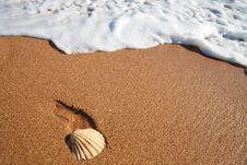 Free Shell And Sea Foam Stock Photos - 20514453