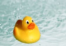 Free Rubber Toy Duck In Water Royalty Free Stock Images - 20514679