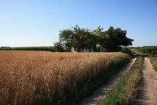 Free Wheat And House Royalty Free Stock Image - 20515786