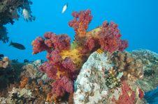 Free Beautiful Soft Coral On A Shipwreck Stock Photo - 20519130