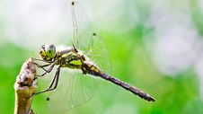 Free Dragonfly Stock Photography - 20519642