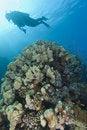 Free Scuba Diver Exploring A Tropical Coral Reef Stock Images - 20520334