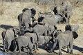 Free Elephant Family Stock Photo - 20524310