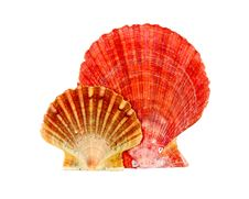 Free Shells Stock Images - 20520024