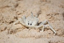 Free Crab On The Beach Stock Photography - 20520062