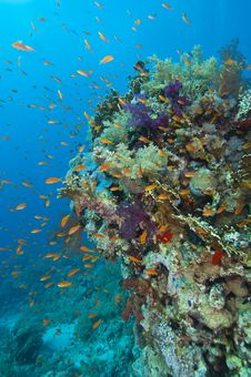 Free Tropical Coral Reef Stock Image - 20520221