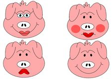 Free Pig Head Stock Photos - 20521463