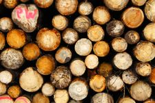 Free Logs Royalty Free Stock Photos - 20524238
