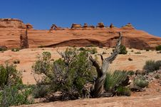Free Arches National Park Royalty Free Stock Photos - 20524358