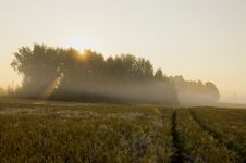 Free Summer Morning With Mist Stock Image - 20526641