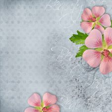 Free Background For Greeting Card Stock Images - 20526884