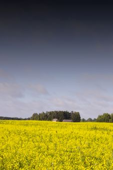 Free Landscape With Yellow Rape Royalty Free Stock Photos - 20527098