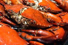 Free Deep-Fried Meat Crab Stock Images - 20527124