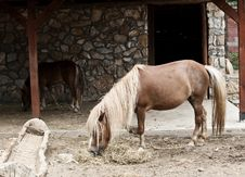 Small Horse Royalty Free Stock Image
