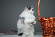Funny Persian Cat Sitting Near Basket On Grey