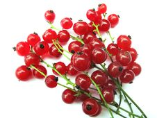 Free Gooseberries (currants) Royalty Free Stock Photography - 20528707