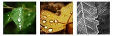 Free Leaf Images Banner Stock Images - 20528724