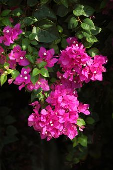 Free Flower Grouping Royalty Free Stock Photography - 20530377